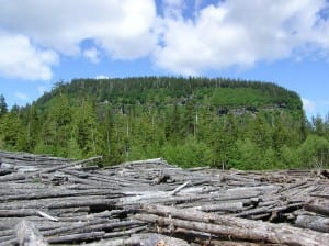 Beached logs pile up in Shoal Cove on Revilla Island in the Tongass National Forest. A new report challenges old-growth logging spending in the forest. (Jim Baichtal/USFS)
