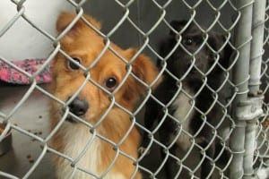 Two of the dogs impounded October 9th