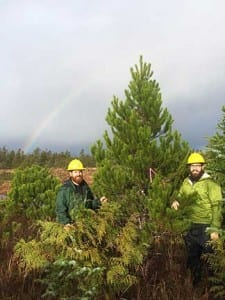 Aaron Steuerwald and Steve Hollis found the best available Shore Pine were on the Shoal Cove road system on Revillagigedo island in Southeast Alaska. (USFS photo)