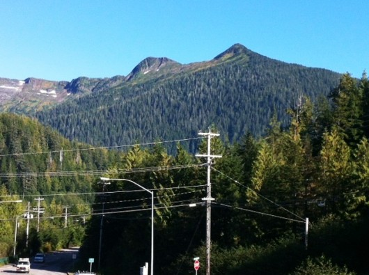 Options floated to Deer Mountain logging