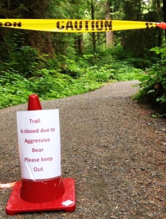 Problem bear prompts Ward Lake closure