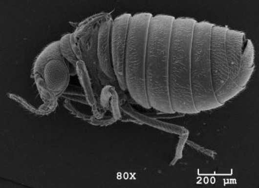 Grad student discovers new insect species on POW