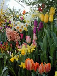 Planning for fall bulbs / fertilizer facts