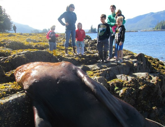 Some children came to watch the sea lion necropsy with their moms on Thursday morning.