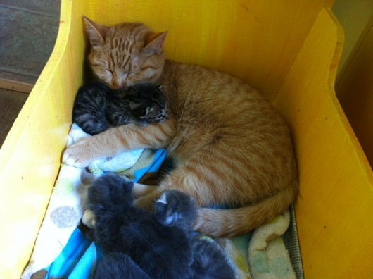 Henry snuggles with one of the 3-week-old kittens found abandoned on Prince of Wales.