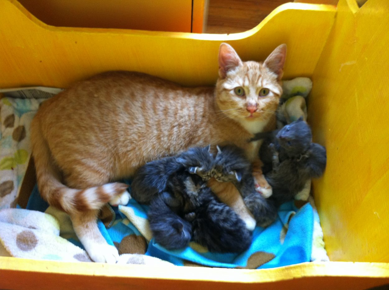 Male cat nurtures litter of abandoned kittens KRBD