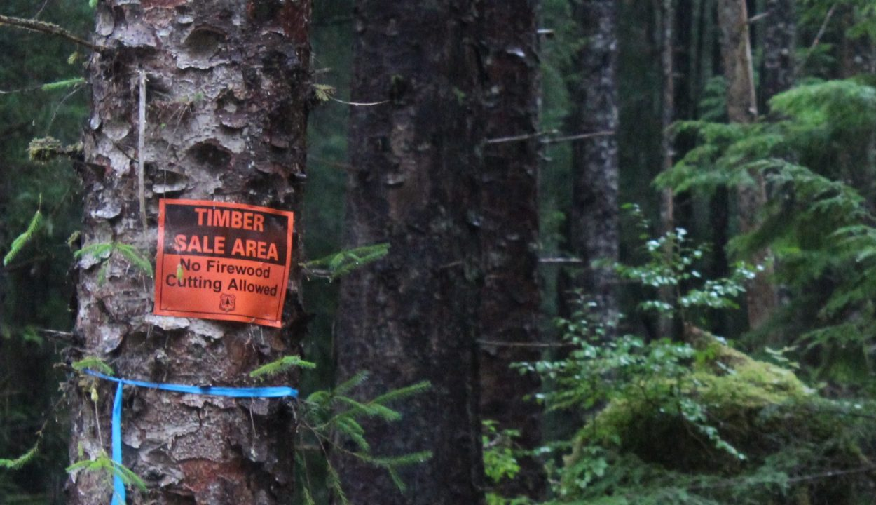POW offers first all-young-growth timber sale