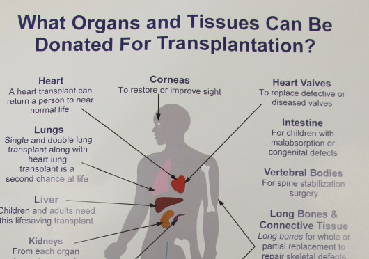 to be or not to be an organ donor krbd