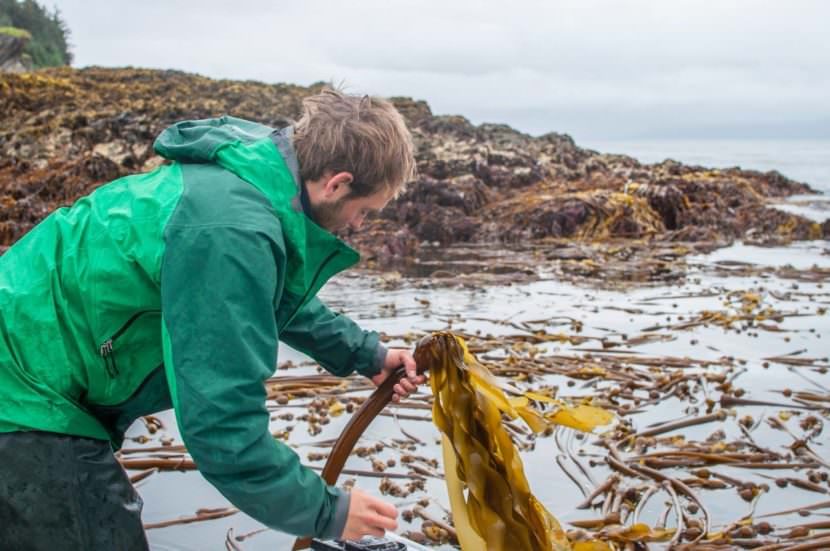 Sea-to-table movement takes root with Alaska's growing kelp industry