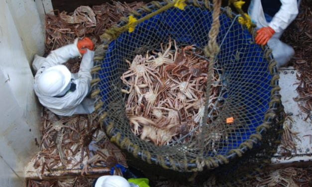 Fish and Game says crab counts were low this season, fishermen disagree