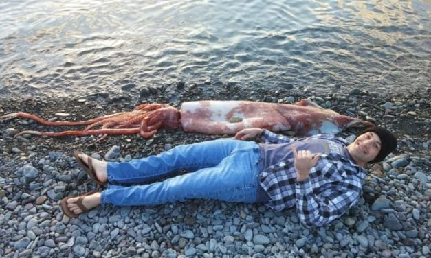 Two dead squid in two weeks: Coincidence?