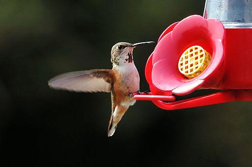 Migratory birds return to Southeast