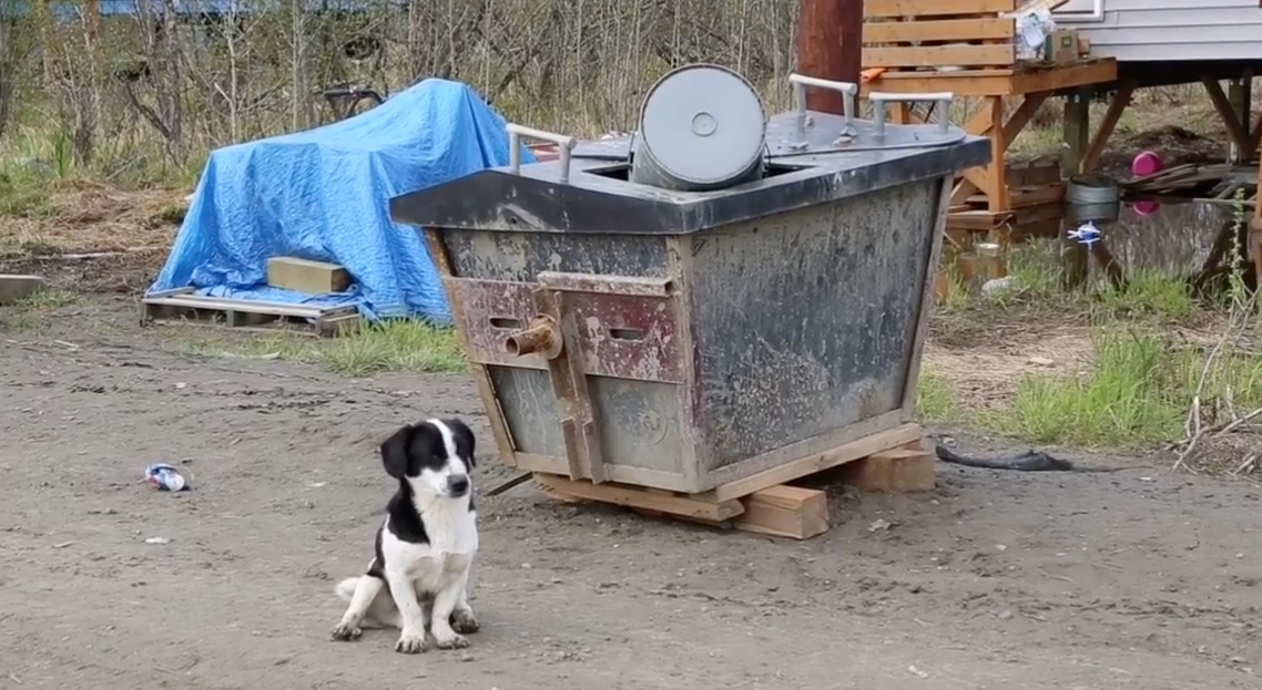 Improving the lives of people and dogs in rural Alaska