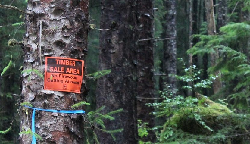 A timber sale sign is posted in the Tongass National Forest on Prince of Wales Island. The state is in court again, trying to end the U.S. Forest Service's roadless rule, which limits logging and other development in the Tongass. (KRBD file photo)