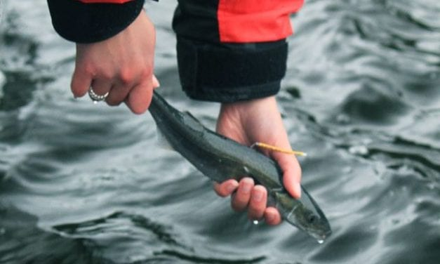 Board of Fisheries passes annual black cod limit for sport fishing