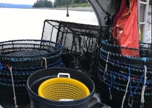 Board of Fisheries requires daily bag limits for subsistence shrimp harvest