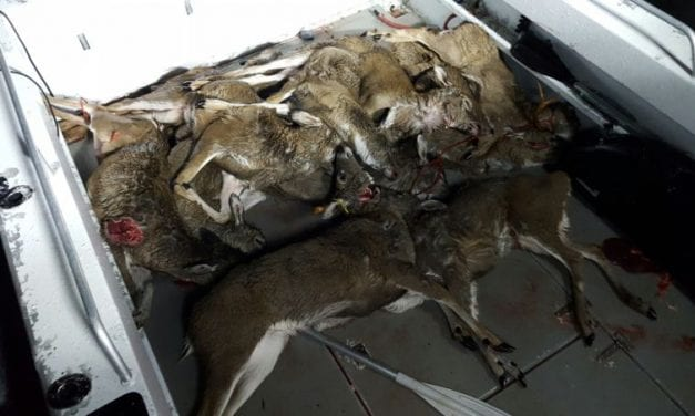 Five Juneau residents ordered to pay fines, restitution for deer poaching
