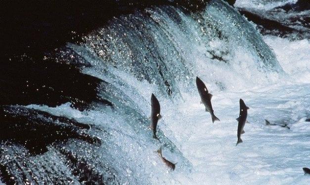 Stand for Salmon vs Stand for Alaska