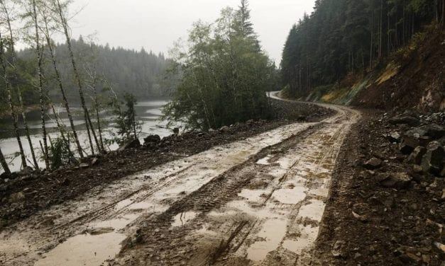 Federal judge's ruling could ease Tongass roadbuilding