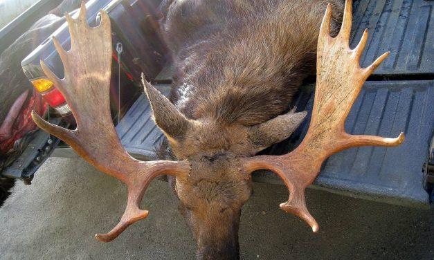 Board votes down change to moose hunt season in Southeast