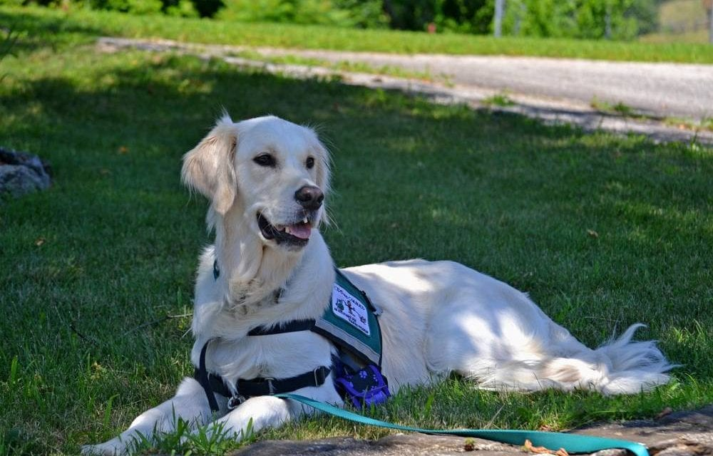 Service animals, emotional support animals and the ADA