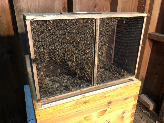 Success raising honey bees in Southeast Alaska - KRBD
