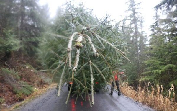 PHOTOS: Wrangell's Christmas tree tradition