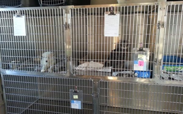 After months without animal control, Nome has a temporary solution for loose dogs